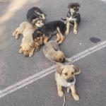 Χαρίζονται ημίαιμα σκυλάκια