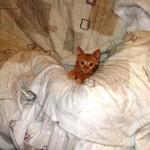 Χαρίζεται ζουζουνο γατάκι. Θεσσαλονίκη