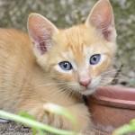 Xαρίζονται πανέμορφα γατάκια!!