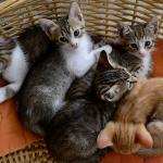 Χαρίζονται μικρά γατάκια!!