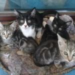 Χαριζονται γατακια