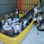 9 γατάκια εκπλιπαρούν για σπιτάκια
