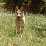 'Αιρα , μια σκυλίτσα που αναζητά αγάπη