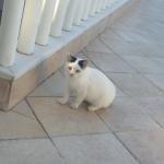 Χαρίζεται μικρό γατάκι