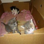 Χαριζονται μωρα γλυκα γατακια