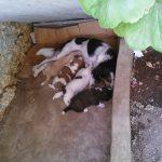 Βρεθηκαν εγκαταλελημενα και χαριζονται αυτα τα πανεμορφα σκυλακια…