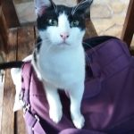 Γάτα ψάχνει σπίτι!