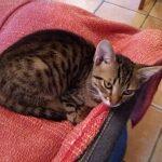 Γατάκι ψάχνει για σπίτι!